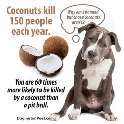 pit bull facts don't kill don't fight it is the owner