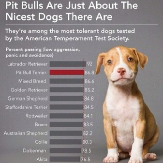 pit bulls are not evil
