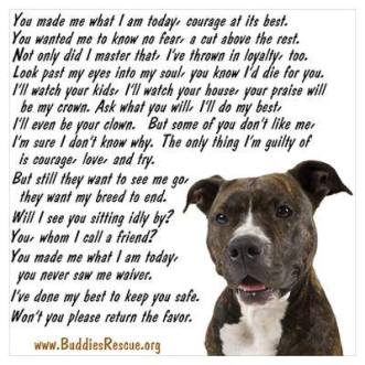 pit bulls are not mean